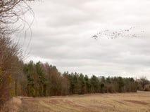 鸟多云喜怒无常的阴暗天气迁移天空群  库存图片