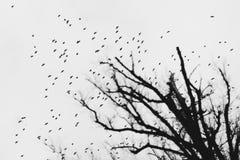 鸟大群反对灰色天空和不生叶的树的 库存照片