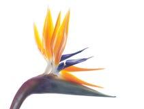 鸟天堂 库存图片