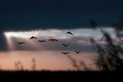 鸟天空 免版税库存图片