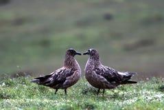 鸟夫妇 库存照片