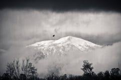 鸟孤立风暴 免版税库存图片
