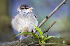 鸟小的年轻人 免版税库存照片
