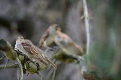 鸟小组 库存图片