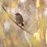 鸟少许结构树 免版税库存照片