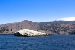 鸟岩石卡塔利娜海岛 图库摄影