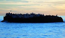 鸟岩石日落视图在海斯勒公园下的拉古纳海滩的,加利福尼亚 库存图片