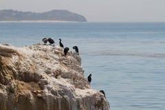 鸟岩石海运 免版税库存照片