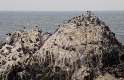 鸟岩石 库存照片
