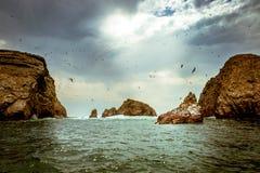 鸟岩石 图库摄影