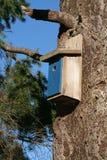 鸟嵌套 库存图片