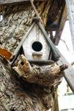 鸟嵌套s 图库摄影