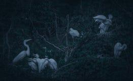 鸟巢与小狗的在黄昏 图库摄影