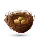 鸟巢和金黄鸡蛋 免版税库存图片