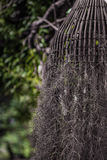 鸟巢树 库存图片