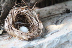 鸟巢用鸡蛋 免版税库存图片