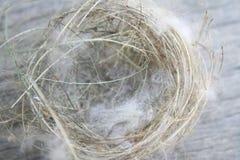 鸟巢,从树的秋天 免版税库存照片