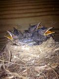 鸟巢 库存照片