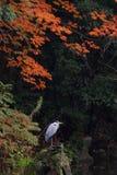 鸟庭院东方人 图库摄影