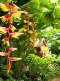 鸟开花天堂热带的泰国 免版税库存照片