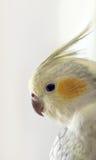 鸟异乎寻常的配置文件 免版税库存图片