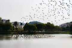 鸟形成 免版税库存照片