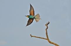 鸟彩虹 库存图片