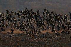 鸟惊人的群在日落的 免版税库存图片