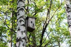 鸟房子和桦树 免版税库存图片