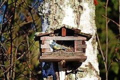 鸟房子在森林里 免版税图库摄影