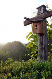 鸟房子本质上 库存照片