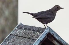 鸟房子s 库存图片