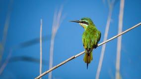 鸟接近的动物南非 库存图片