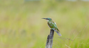 鸟接近的动物南非 图库摄影