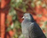 鸟接近的鸽子 库存照片