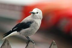 鸟接近  免版税库存照片