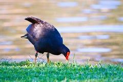 鸟提供 库存照片