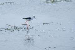 鸟搜寻步行 库存照片