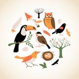鸟收集 免版税库存图片