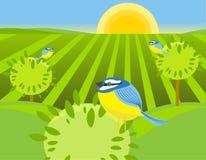 鸟春天 免版税库存图片