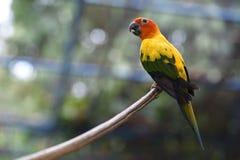 鸟是海岛的木头 免版税图库摄影
