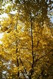 鸟景色玉龙雪山在冬天 库存图片