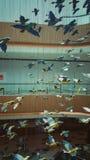 鸟曲拱建筑学内部 免版税库存照片