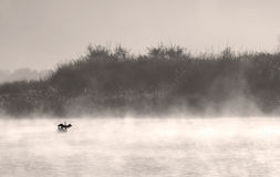 鸟有雾的湖 免版税库存图片