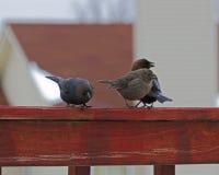 鸟朋友 免版税库存照片