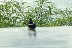 鸟本质上演奏水的 免版税库存图片
