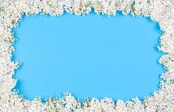 鸟束起樱桃框架 免版税库存图片