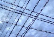 鸟查出空白电汇 免版税库存照片