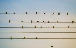 鸟查出空白电汇 图库摄影