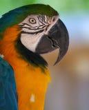 鸟查阅 免版税库存照片